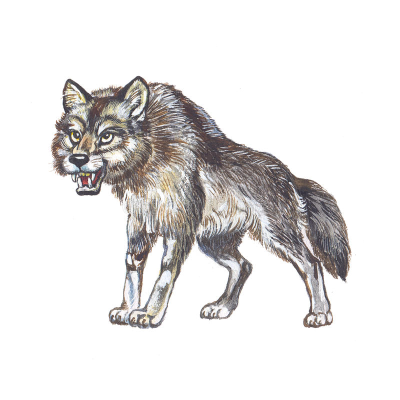 Lobo cinzento ilustração royalty free