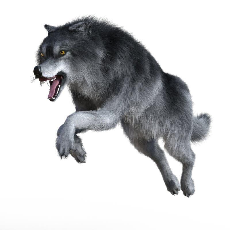 Lobo de la caza aislado ilustración del vector
