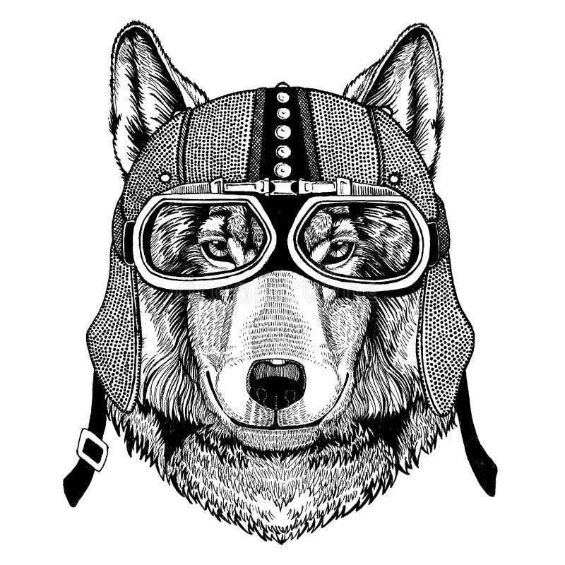 Lobo, motocicleta que lleva animal salvaje del perro, aero- casco Ejemplo del motorista para la camiseta, carteles, impresiones ilustración del vector