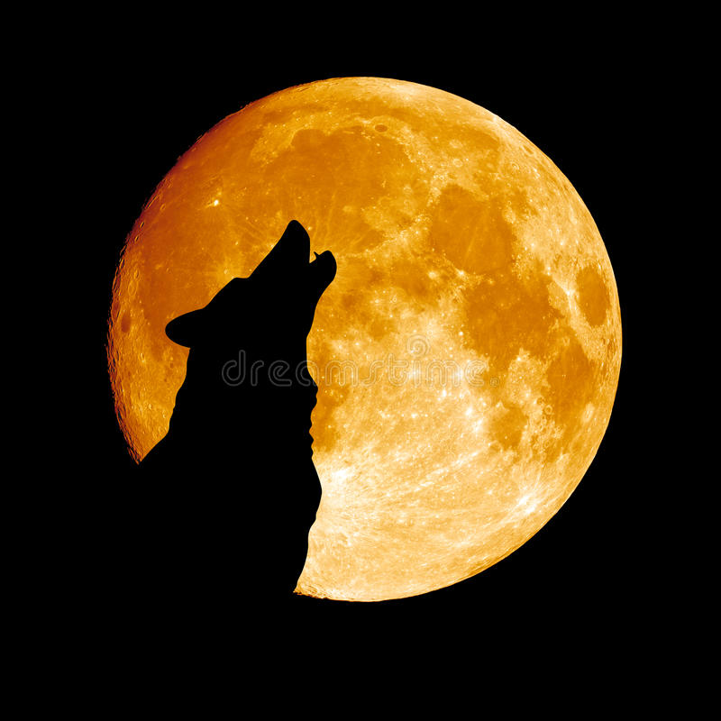 Lobo que grita en la luna imágenes de archivo libres de regalías