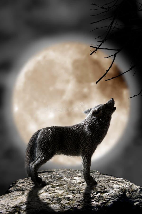 Lobo que urra à lua foto de stock royalty free