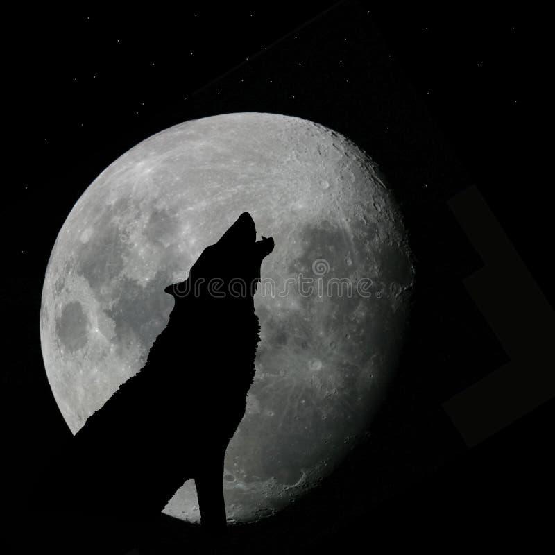 Lobo que urra na Lua cheia ilustração royalty free