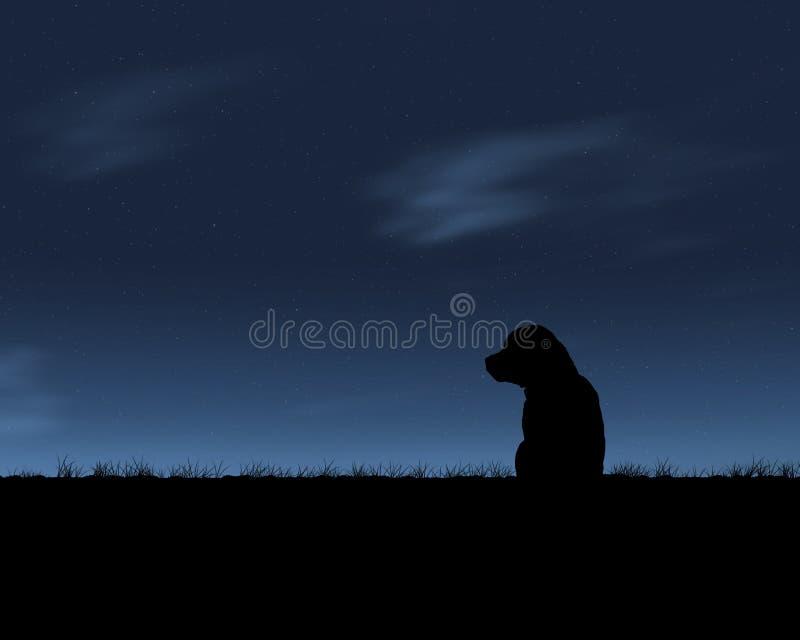 Lobo solitario foto de archivo libre de regalías