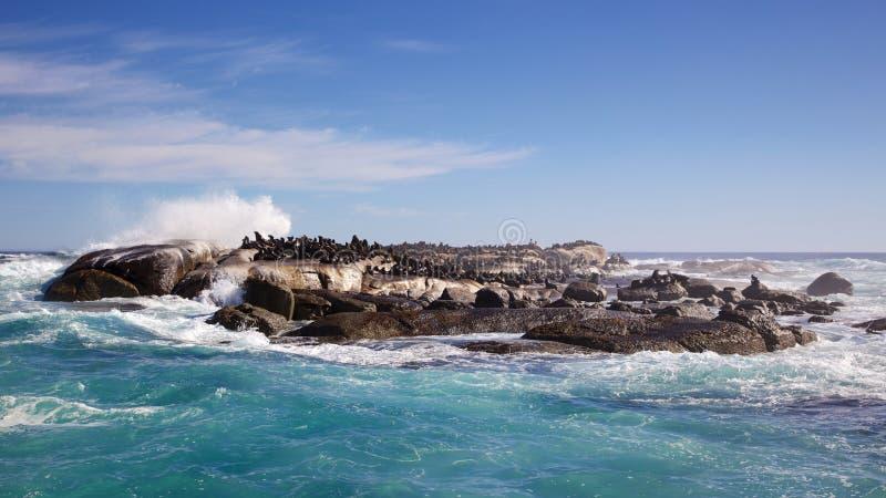 Lobos marinos del cabo imagen de archivo