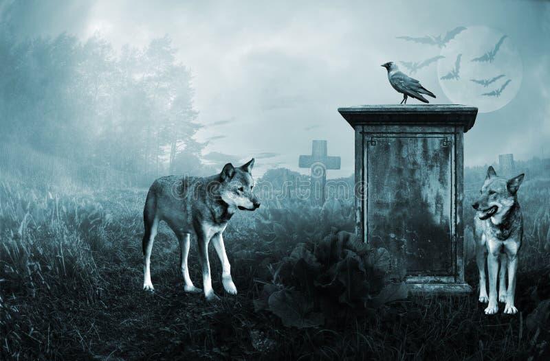 Lobos que guardam um velho imagem de stock