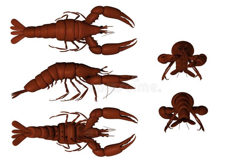 Download Lobster stock illustration. Image of fiddler, water, crawfish - 11844805