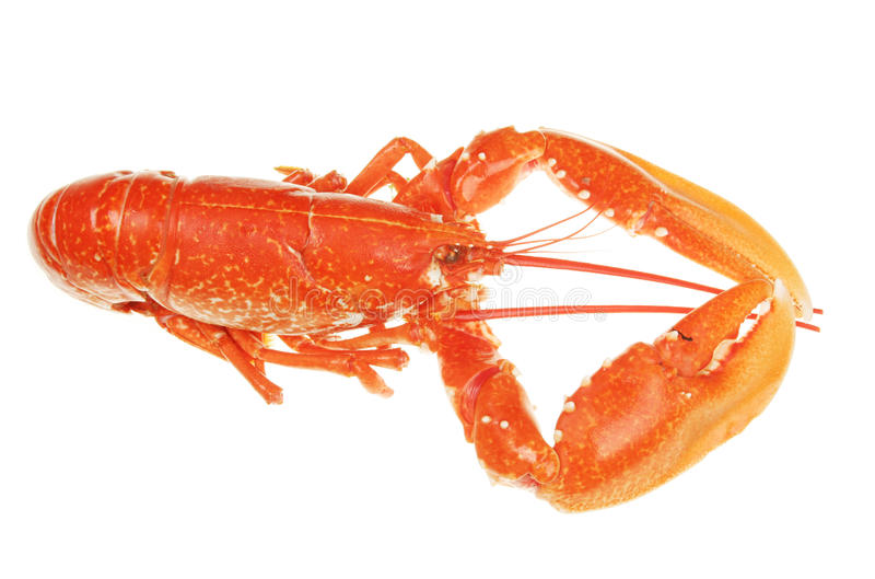 Download Lobster stock image. Image of lobster, carapace, cooked - 12199757