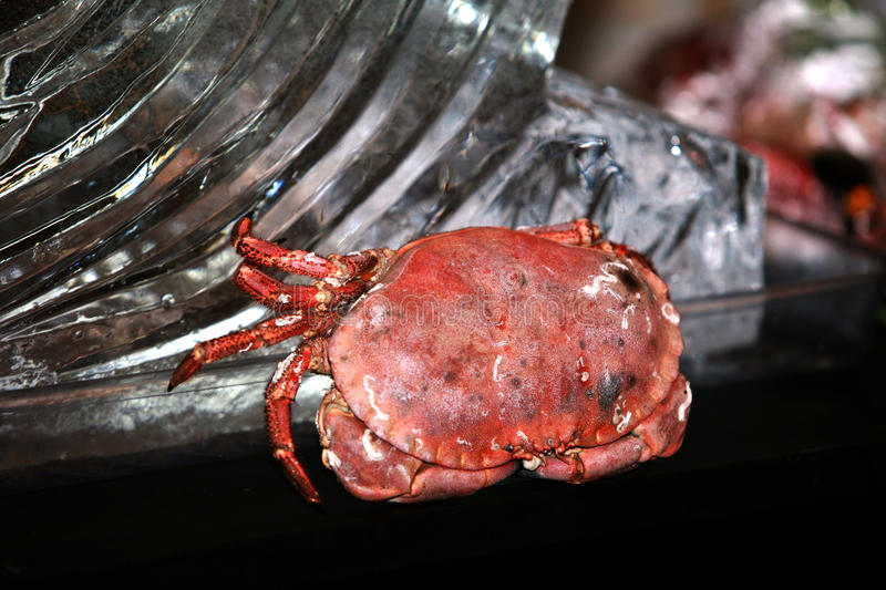 Download Lobster stock photo. Image of marine, lobster, tail, spoon - 15029468