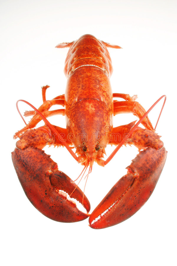Download Lobster Stock Photo - Image: 175920