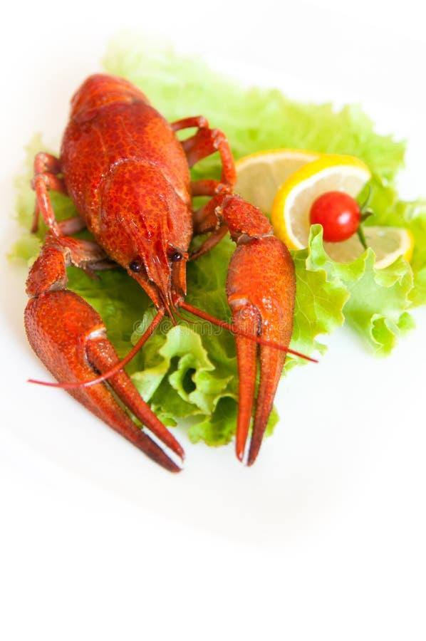 Download Lobster stock image. Image of seafood, crustacean, restaurant - 26961453