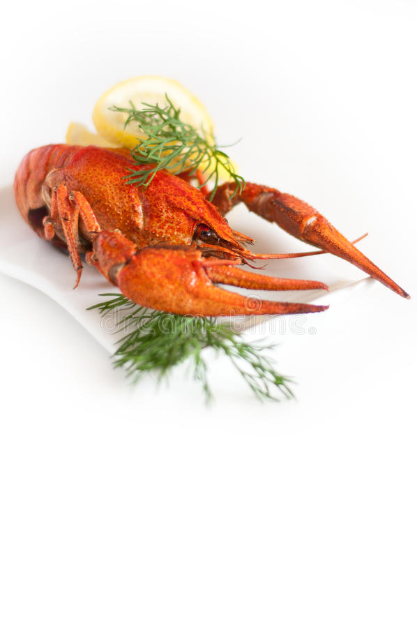 Download Lobster Royalty Free Stock Photography - Image: 26961467