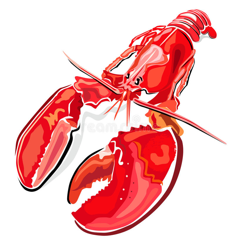 Lobster. Vector illustration of lobster isolated on white background stock illustration