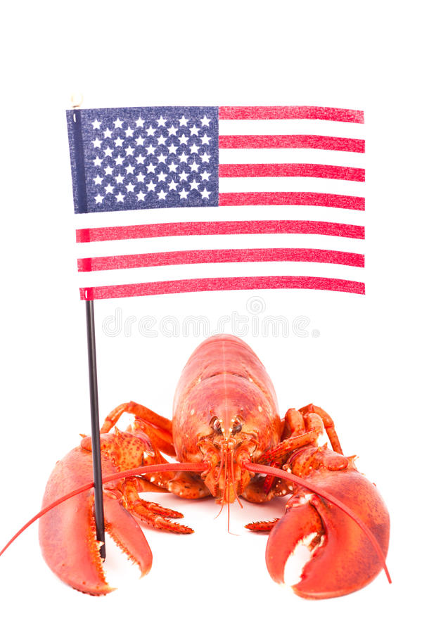 Lobster with american flag stock photo. Image of healthy - 20648700