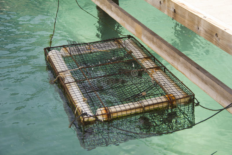 Download Lobster Cage stock photo. Image of commercial, creel - 28090280