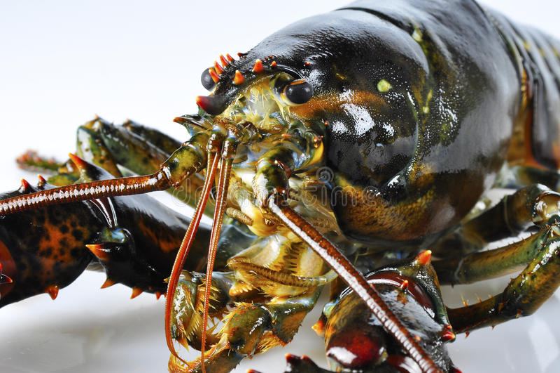 Lobster closeup stock photo