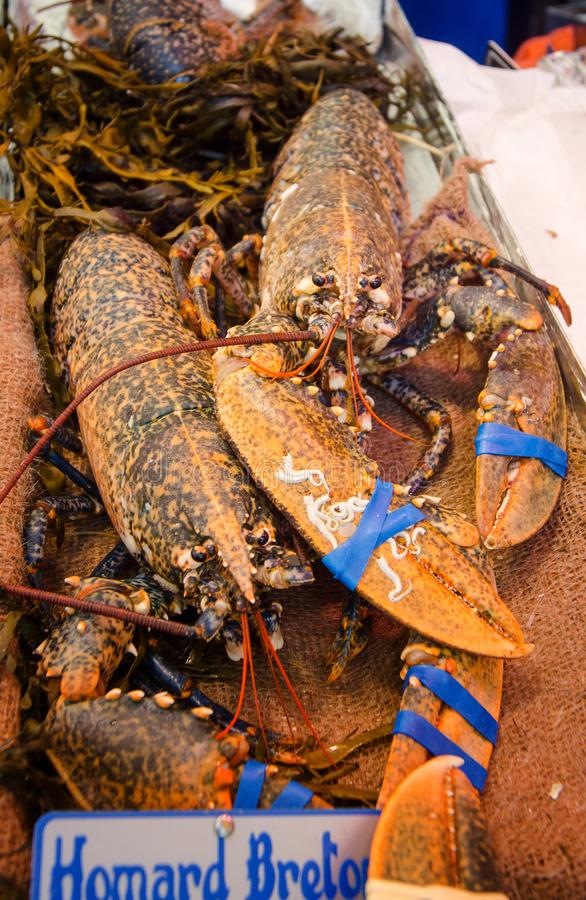Lobster on the fish market. In Paris stock images