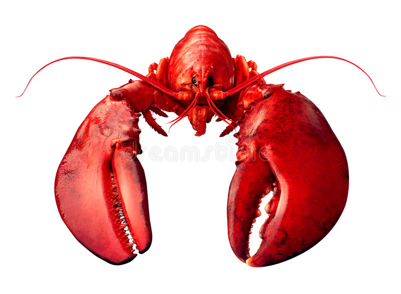 Lobster Front View Stock Photo Image Of Lobster Symbol 84231292