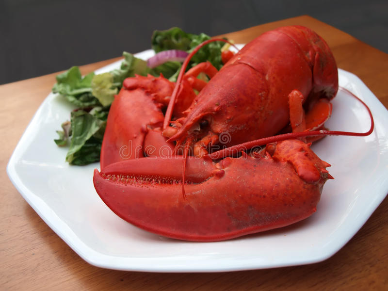 Download Lobster meal 3 stock photo. Image of cooked, lunch, food - 10457820