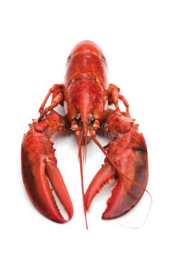 Free Lobster On White Stock Image - 4077971