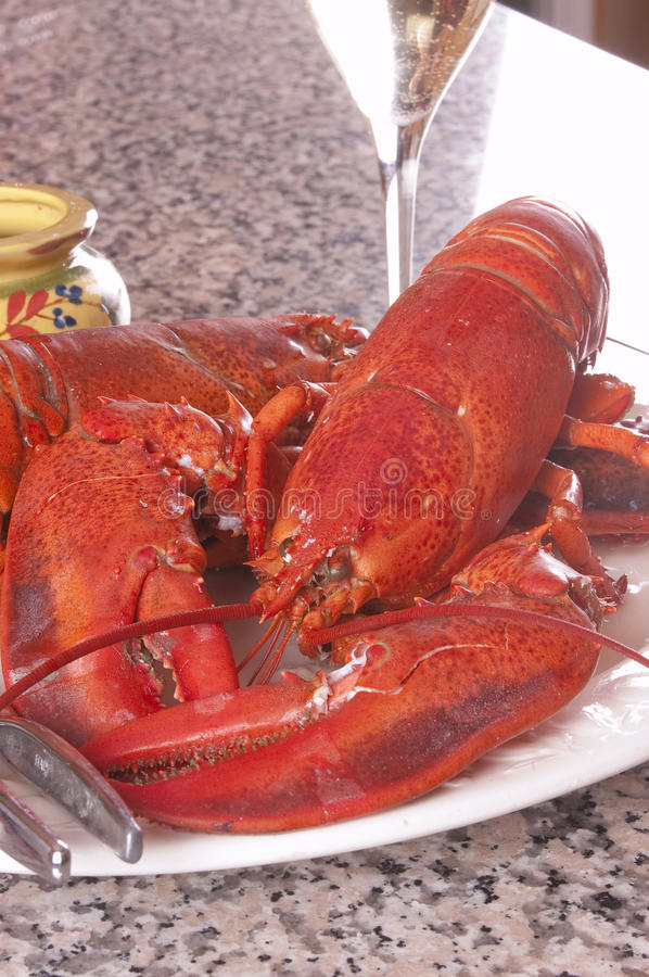Download Lobster plate stock photo. Image of lobster, closeup - 11158694