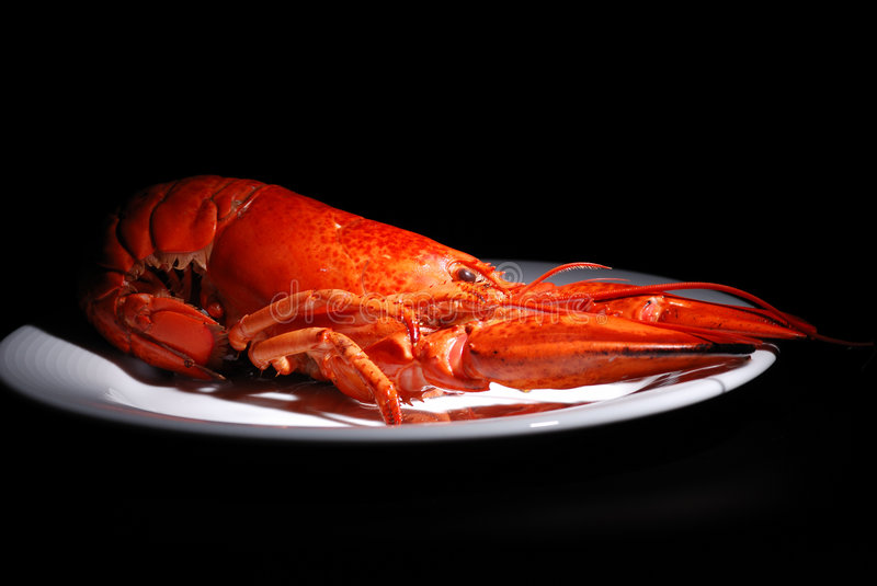 Lobster on plate royalty free stock photos