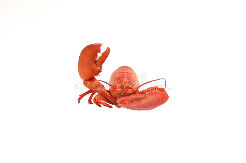 Lobster say hello royalty free stock images