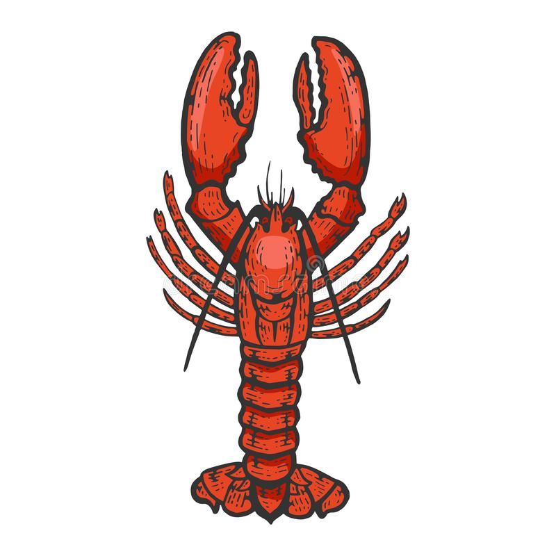Free Lobster Sea Animal Color Sketch Engraving Vector Royalty Free Stock Images - 155209669
