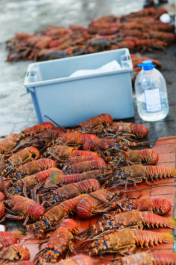 Download Lobster season stock photo. Image of seafood, delicious - 29149400