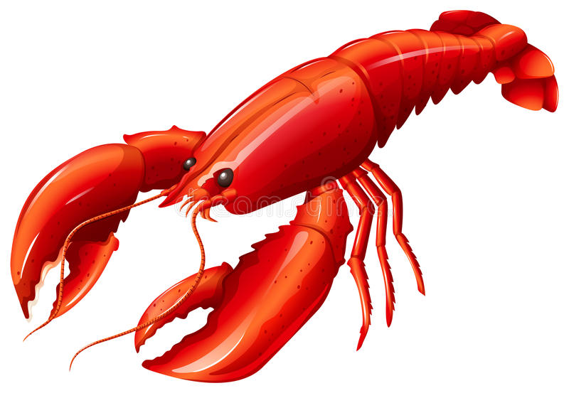 Lobster. Single red lobster with two claws stock illustration