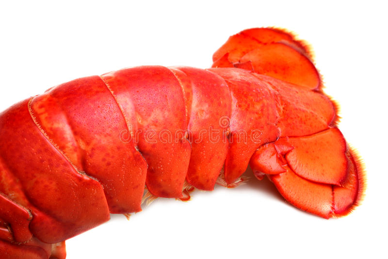 Lobster tail royalty free stock images