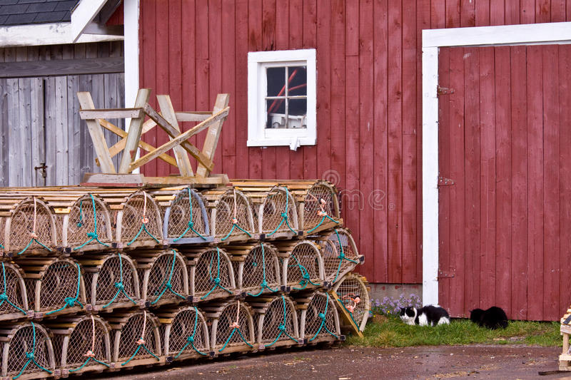 Lobster traps and two kitty cats in front of shed, Prince Edward Island, Canada. Lobster traps and two kitty cats in front of shed, North Rustico Harbour on the royalty free stock photography