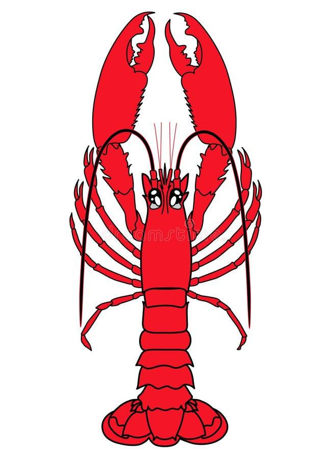 lobster vector clip art stock vector illustration of animal rh dreamstime com lobster clipart vector lobster clipart images