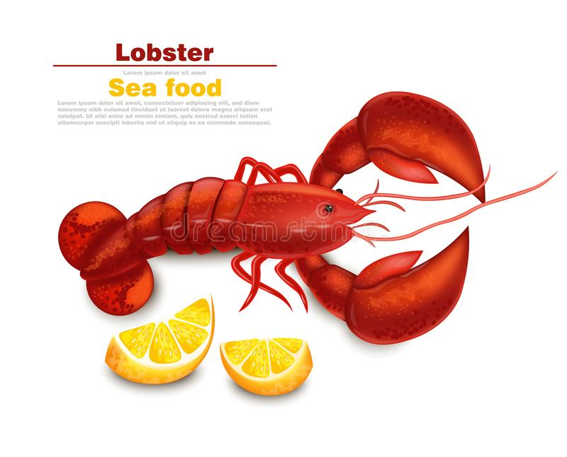 Lobster Vector realistic isolated. Fresh Detailed seafood 3d illustrations. Lobster Vector realistic isolated. Fresh Detailed seafood 3d illustration royalty free illustration