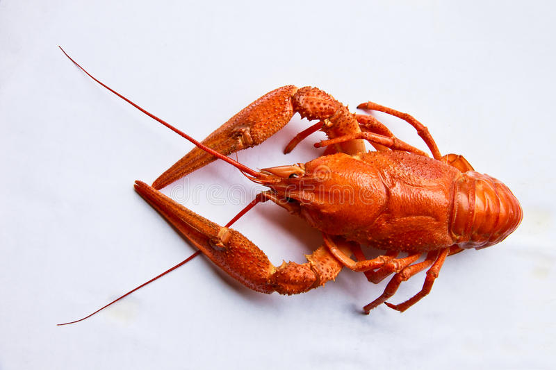 Download Lobster on white stock image. Image of healthy, single - 25870581