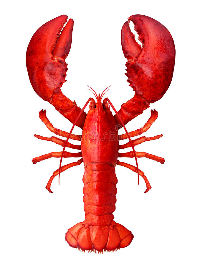 Lobster. On a white background as fresh seafood or shellfish food concept as a complete red shell crustacean in an overhead view isolated on a white background vector illustration