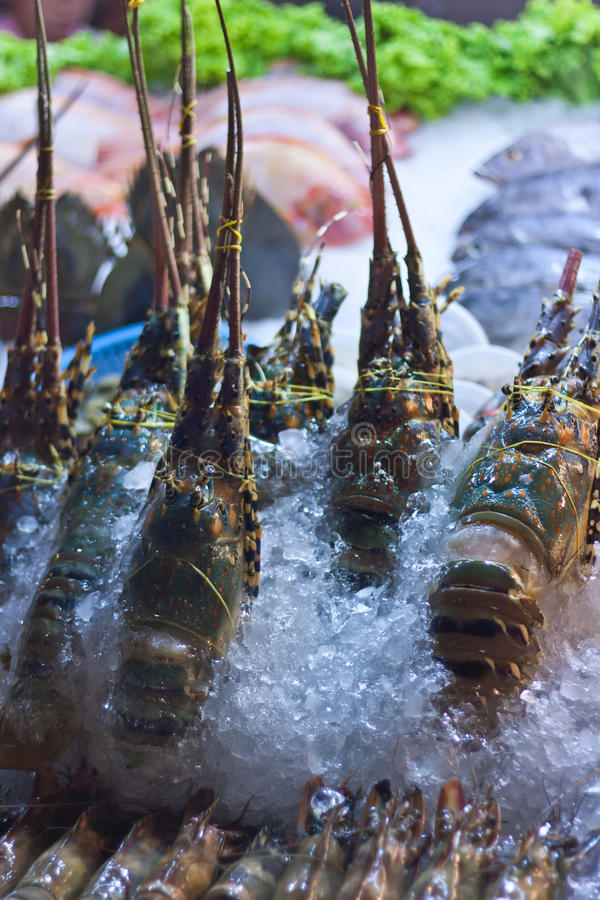 Lobsters in ice royalty free stock photos