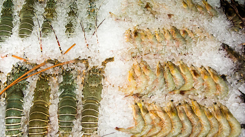 Lobsters and prawns royalty free stock photos