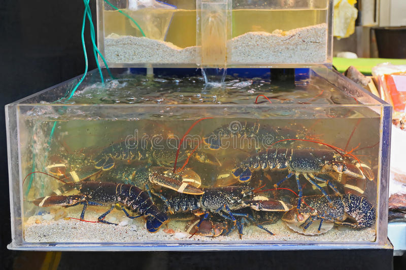Lobsters in Tank. Live Lobsters in Tank at Fish Market stock images