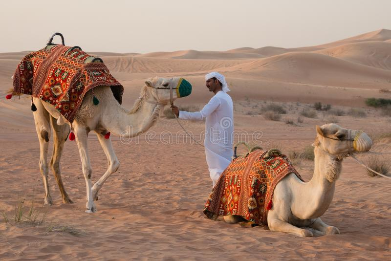 Local arab man with two camels in desert, UAE. DUBAI, UAE - February 18, 2018: Arab man with camels in desert near Dubai royalty free stock images