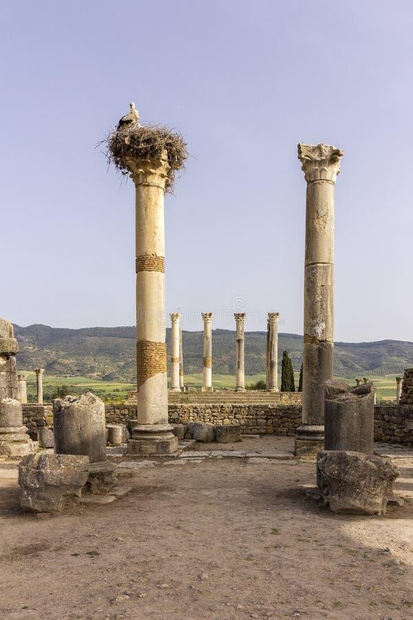Local arqueológico de Volubilis, cidade antiga do império romano, Marrocos imagens de stock royalty free
