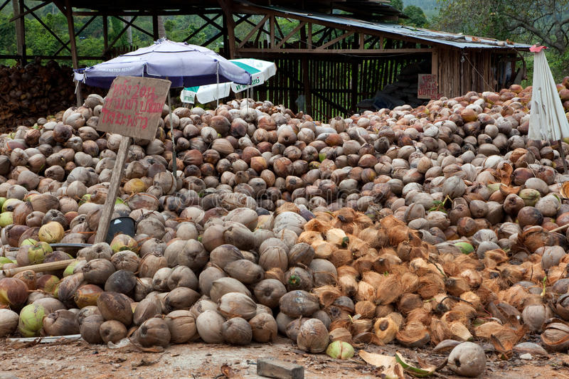 Local Coconuts factory royalty free stock photography