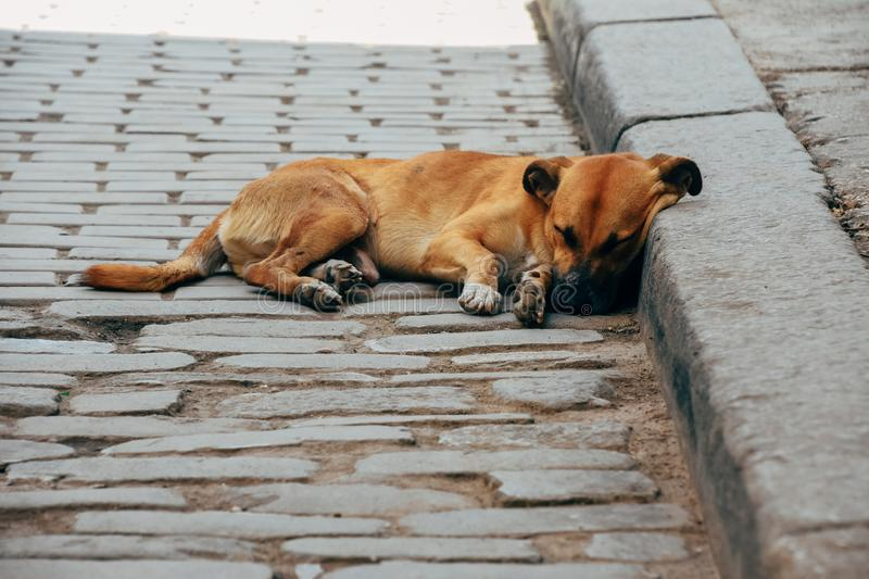 A local dog takes a nap on the street in Havana, Cuba. A local cute dog takes a nap on the street in Havana, Cuba stock photos