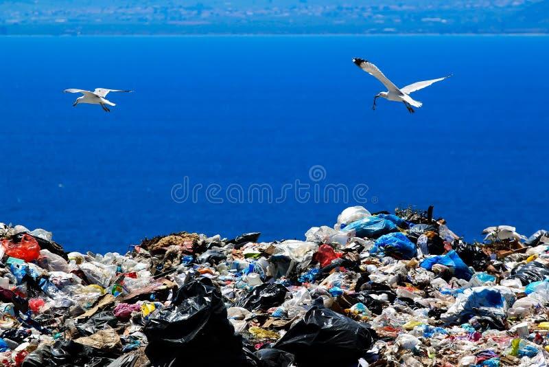 Local de eliminação de resíduos com as gaivotas que limpam para o alimento imagem de stock royalty free