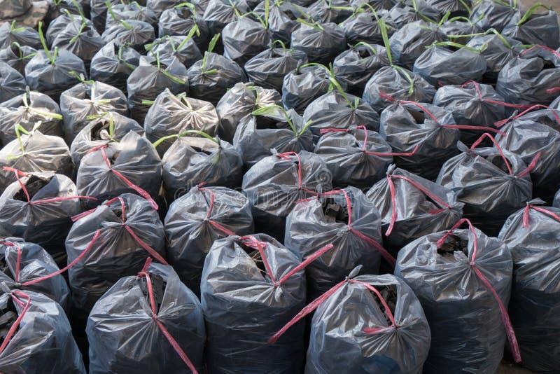 Local de madeira da produção do carvão vegetal com os sacos completos de carvão vegetal foto de stock royalty free