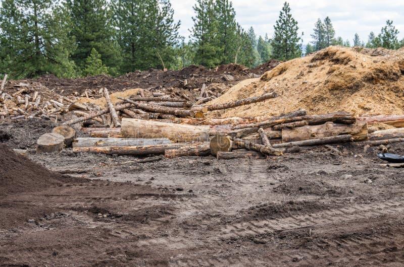 Local de registro na floresta com logs fotografia de stock