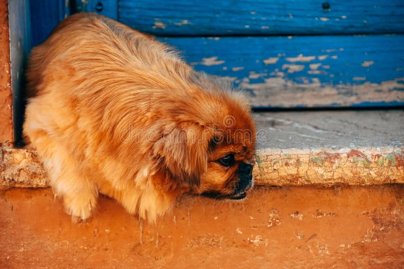 A local dog cools down in the shade in Trinidad, Cuba. A local cute dog cools down in the shade in Trinidad, Cuba stock image