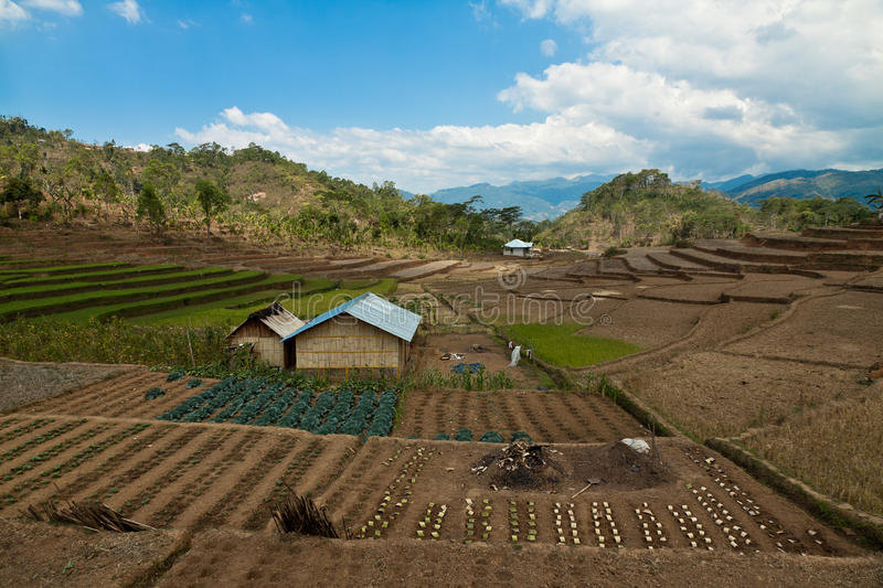 Local Farm, Vegetable garden on Flores, Indonesia stock photography