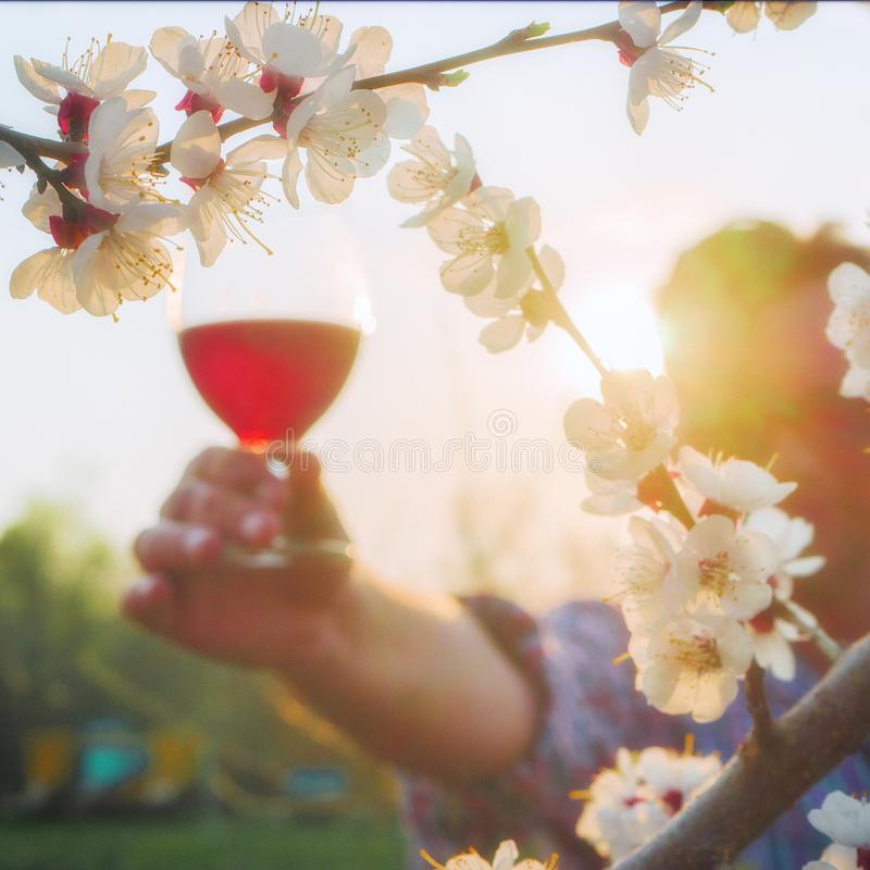 Local focus on blossoming sakura. In the background, a winemaker holds a glass of wine royalty free stock photo