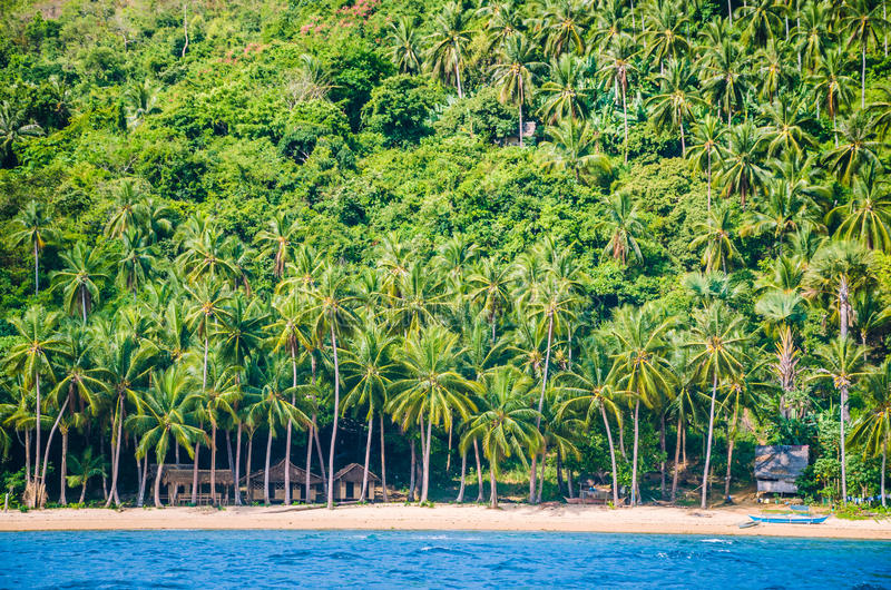 Local huts under palm trees on Cadlao Island, El Nido, Palawan, Philippines stock photography