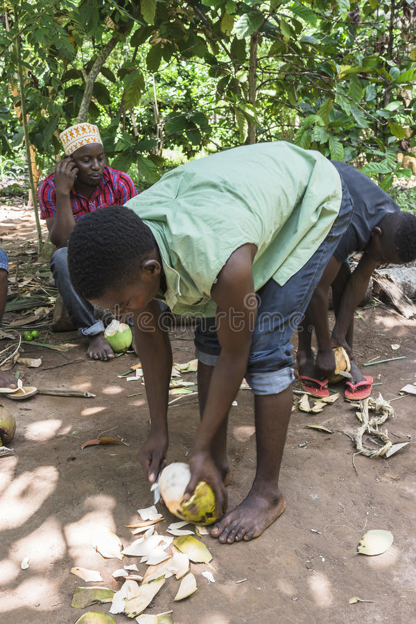 Local man opens the coconut in the jungle royalty free stock image